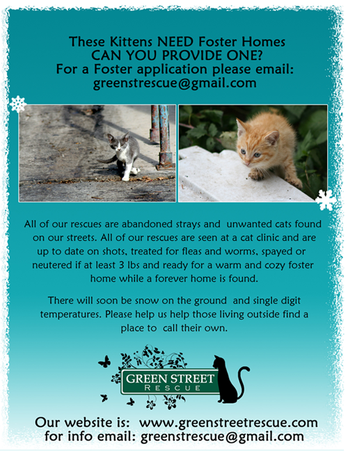 Foster Homes for Cats Needed